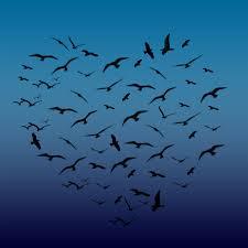 heart shape birds